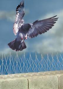 pigeonspikes1
