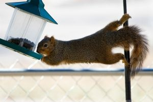 keeping_squirrels_out_of_your_bird_feeder_l4